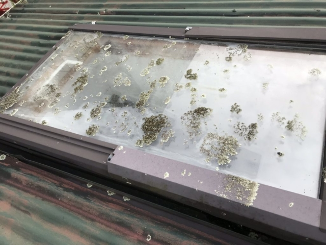 Lichen covered window pane before roof washing