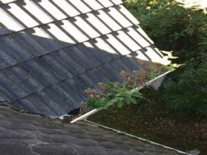 Plant filled house gutter in need of cleaning