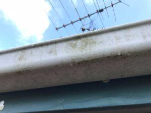 moss on white gutter