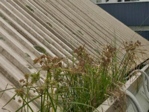 Before roof and gutter cleaning by NZTS