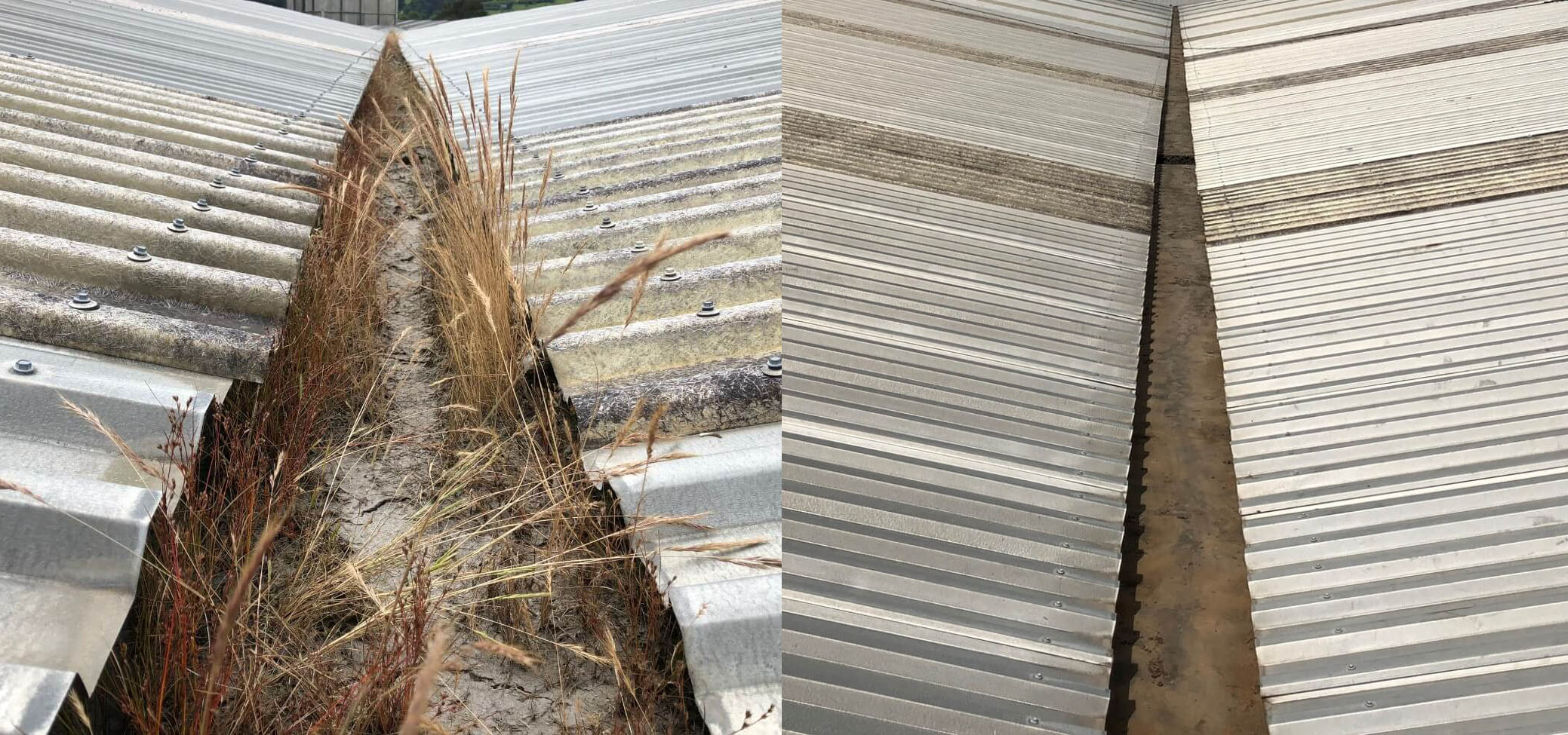 Before and After gutter cleaning by NZTS