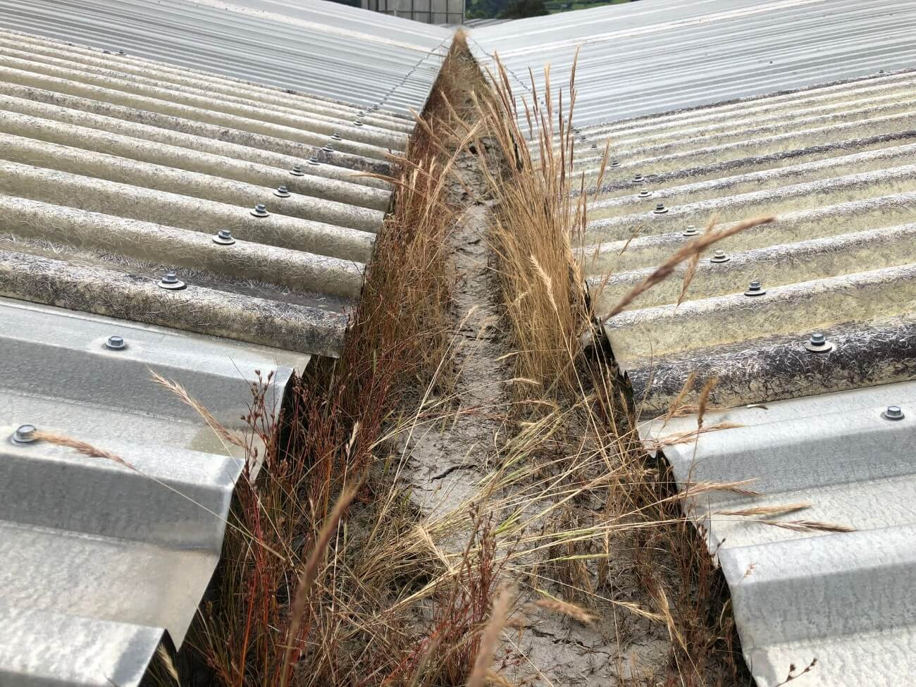 Grass in the gutter before gutter cleaning services